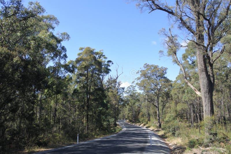 Leere Straße in Tasmanien Australien stockbilder