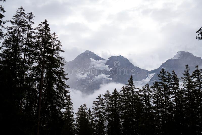 leere Weise mit Wald und nebelig lizenzfreie stockfotografie