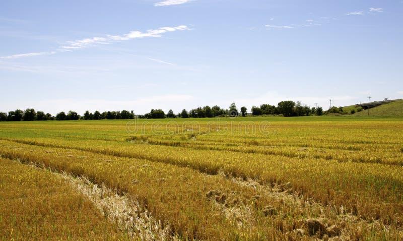 Leeren Sie durchschnittliche Ernte des Feldes stockfotos