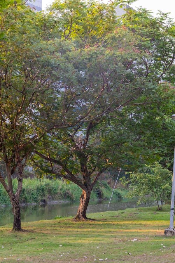 Leerer konkreter Weg am Park lizenzfreies stockfoto