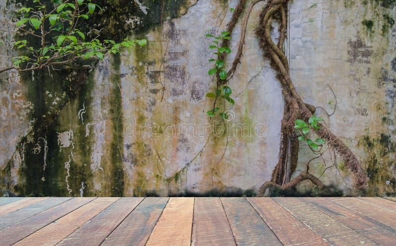 Leerer Raum mit schmutzigem Wand- und Efeugrünbaum und -Bretterboden Leerstelle für Text und Bilder stockfotos