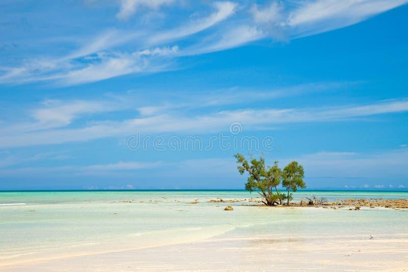 Leerer Strand auf Havelock Insel lizenzfreie stockbilder