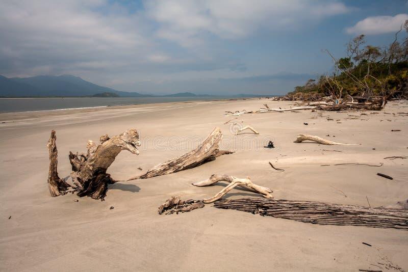 Leerer Strand mit Stämmen im Sand in Brasilien lizenzfreies stockbild