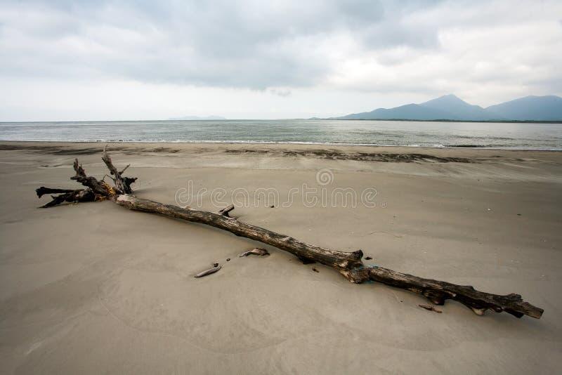Leerer Strand mit Stämmen im Sand in Brasilien stockbilder