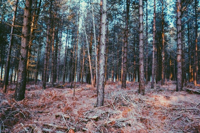 Leerer Wald lizenzfreie stockbilder