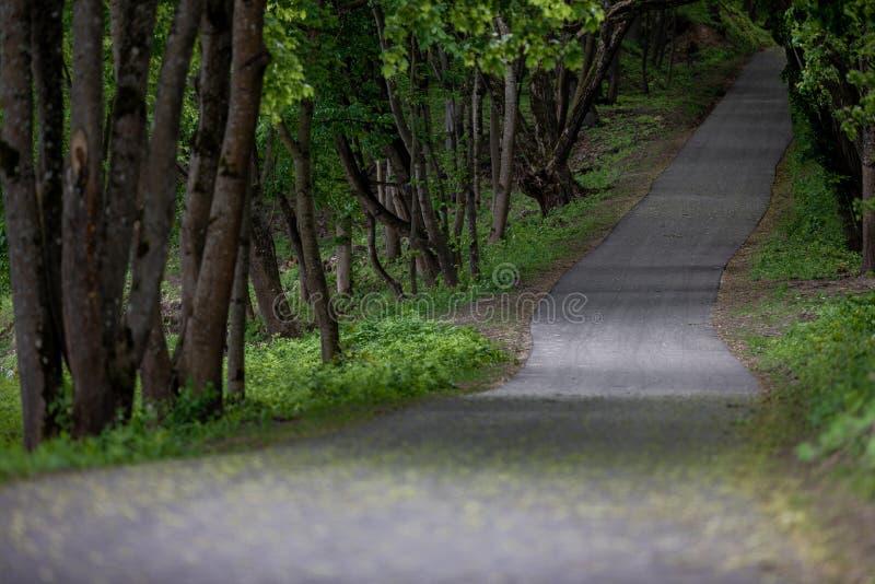 Leerer Weg-?ffentlich Park, Litauen lizenzfreies stockfoto
