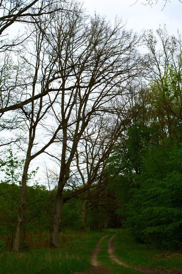 Leerer Weg in einem Wald stockfotografie