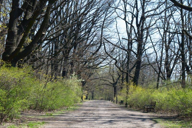 Leerer Weg im Oak Park lizenzfreies stockbild