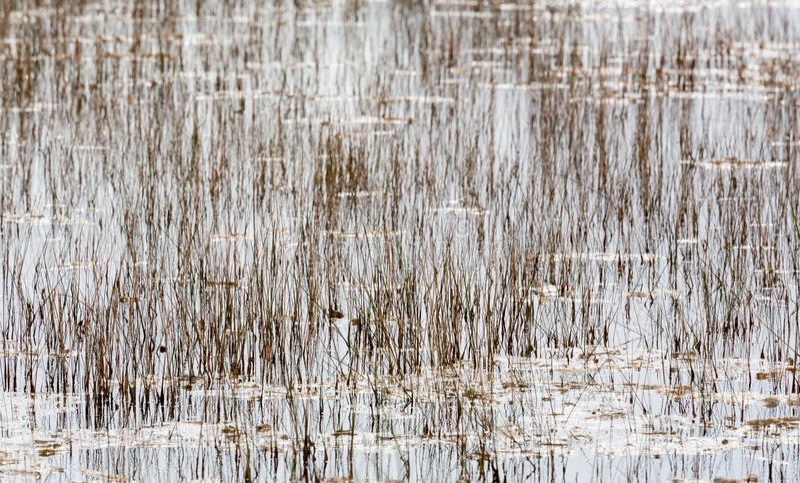 Leeres Bett der Schilfe in den Sumpfgebieten Florida lizenzfreies stockfoto