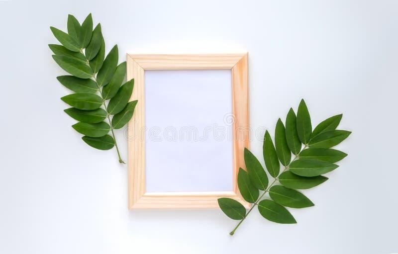 Leeres hölzernes Fotorahmenmodell mit Grün verlässt herum, auf weißem Hintergrund stockfotografie