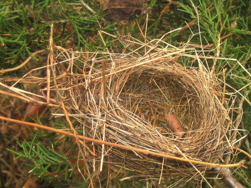 Download Leeres Nest stockfoto. Bild von nester, geschäft, wald, planung - 27788