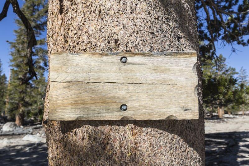 Leeres rustikales hölzernes Zeichen auf Baum stockfotos