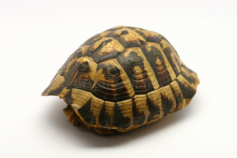 Leeres Schildkröteshell stockfotos