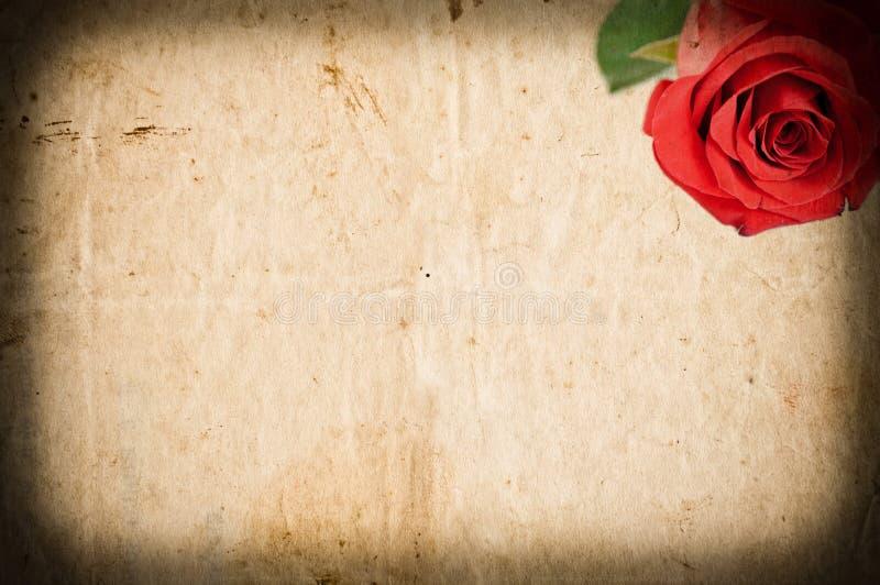 Leeres Schmutzpapier mit roter Rose stockbilder