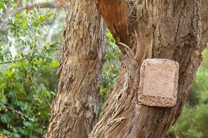 Leeres Steinzeichen, das an getrocknetem Baum mit der Barke weg abzieht hängt lizenzfreies stockfoto