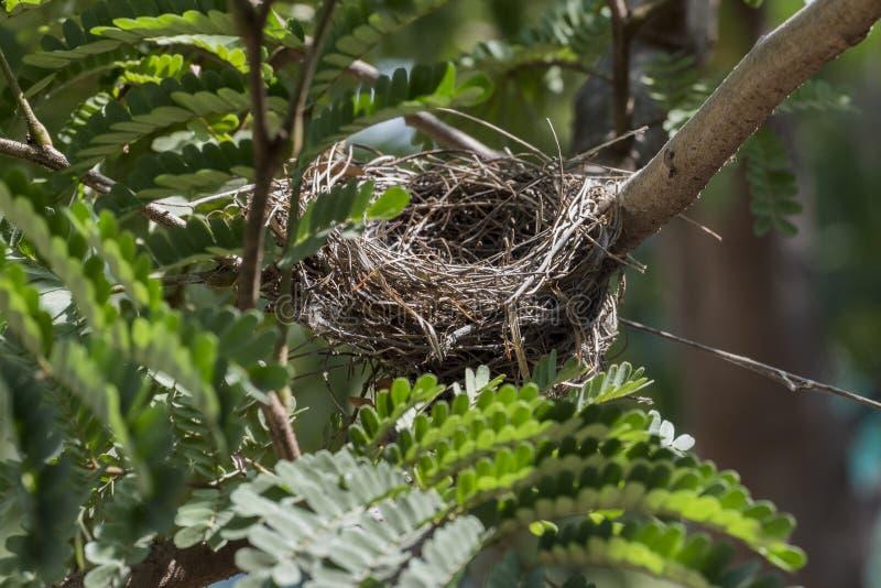 Leeres Vogelnest auf einem Baumast umfasst mit grünen Blättern stockfoto