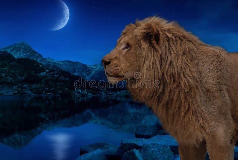 Leeuw bij het nachtmeer onder maan en sterrenbehang stock foto