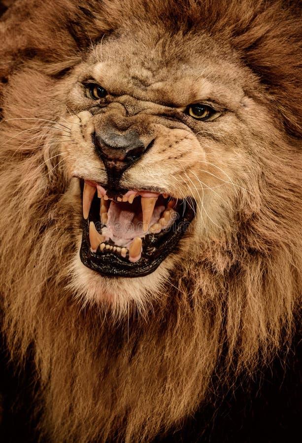 Leeuw in circus royalty-vrije stock afbeelding