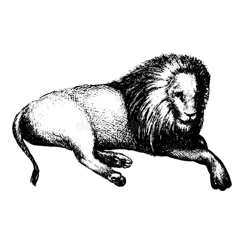 Leeuw op wit wordt geïsoleerd dat Getrokken hand Vector royalty-vrije stock afbeelding