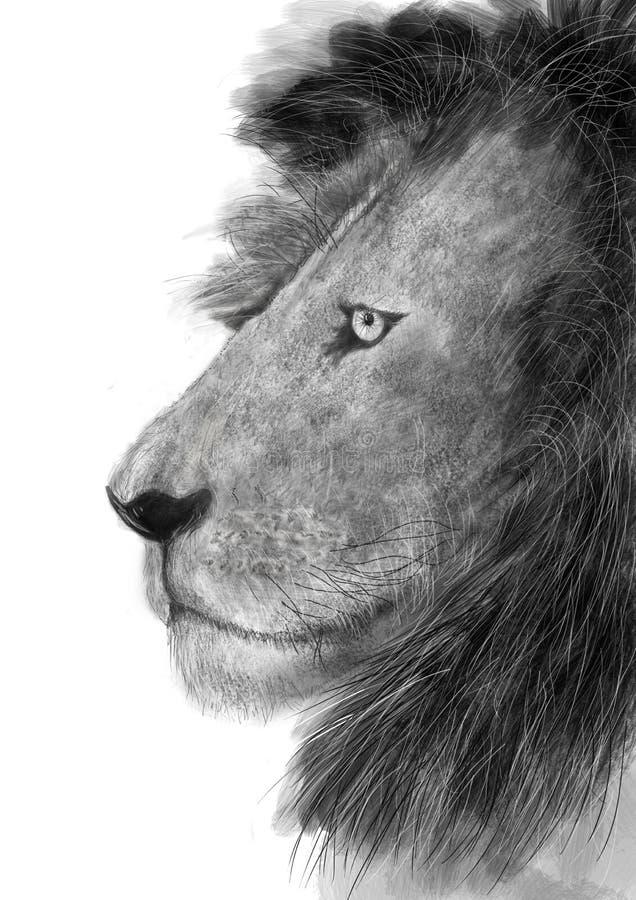 Leeuw - Profiel stock afbeeldingen