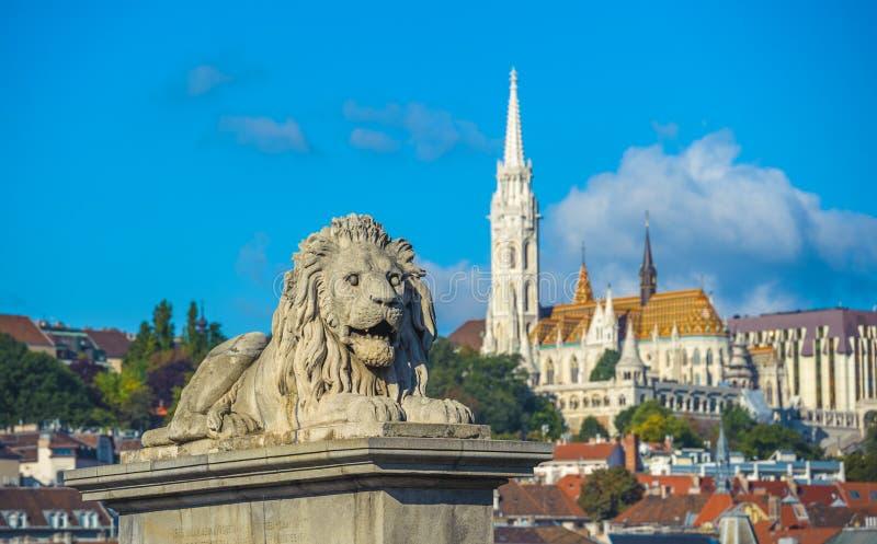 Leeuwbeeldhouwwerken van de Kettingsbrug met de mening van Boedapest stock foto