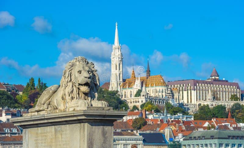 Leeuwbeeldhouwwerken van de Kettingsbrug met de mening van Boedapest stock fotografie