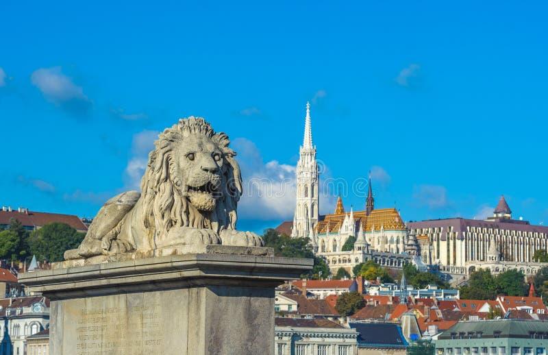 Leeuwbeeldhouwwerken van de Kettingsbrug met de mening van Boedapest royalty-vrije stock afbeelding