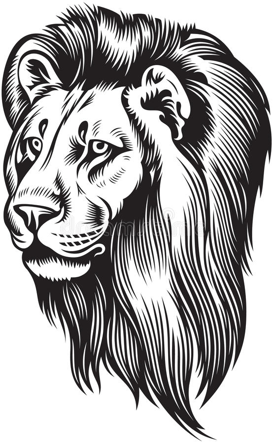 Leeuwhoofd vector illustratie