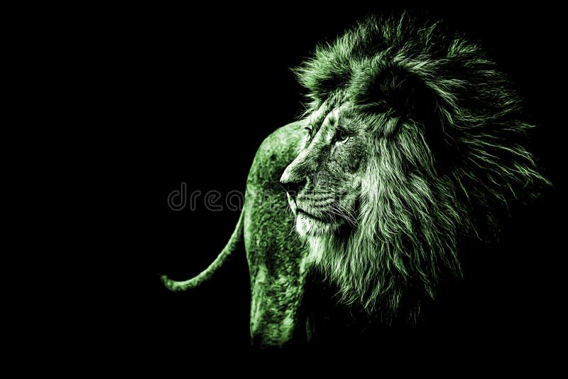 leeuwportret in heldergroene kleuren royalty-vrije stock foto's