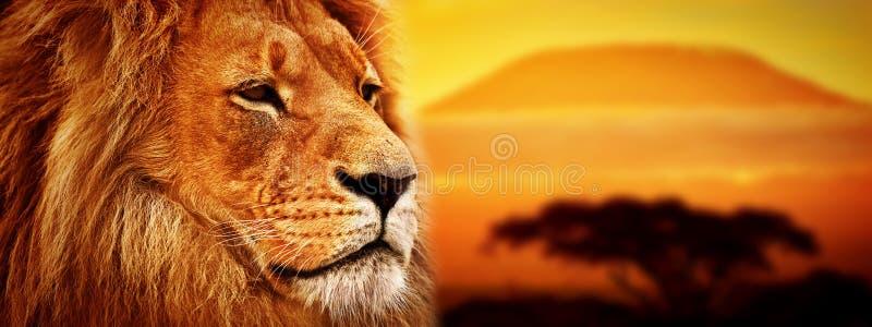 Leeuwportret op savanne. Zet Kilimanjaro op royalty-vrije stock afbeelding