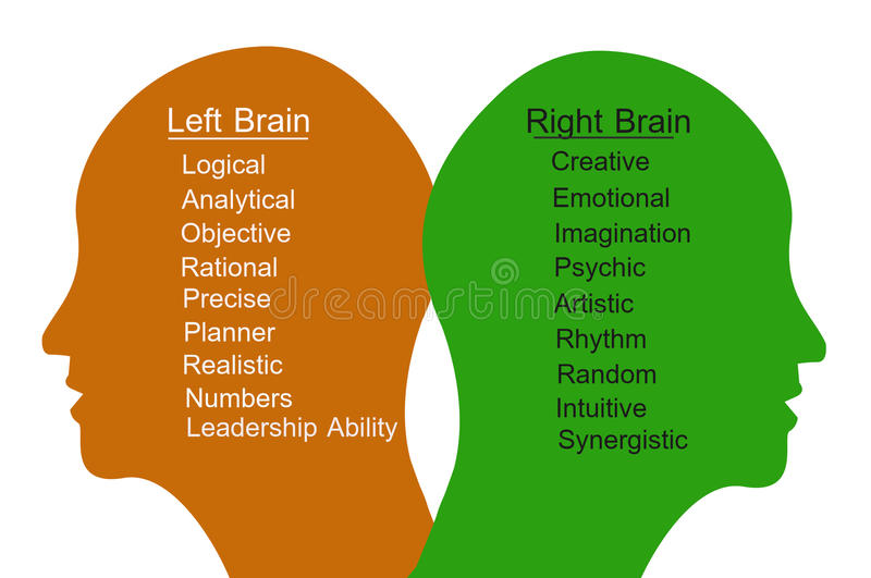 Left Brain and Right Brain vector illustration