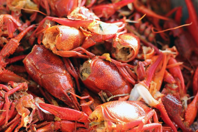 Left Over Crawfish Heads after feasting on boiled crawfish. royalty free stock photography