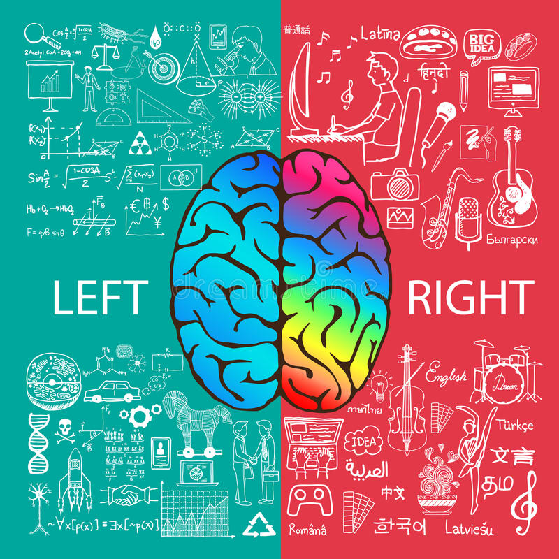 Left and right brain functions with doodles. Left and right brain functions with doodle royalty free illustration