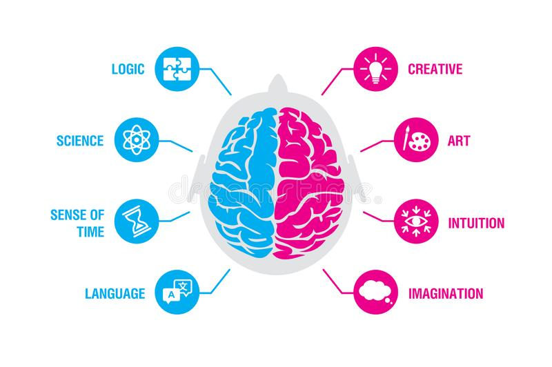 Left and right human brain concept. Logic and creative hemispheres infographics with brain and icons of science, time stock illustration