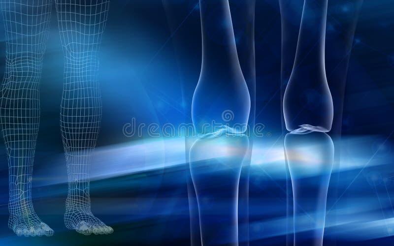Leg bone. Digital illustration of a human leg bone royalty free illustration