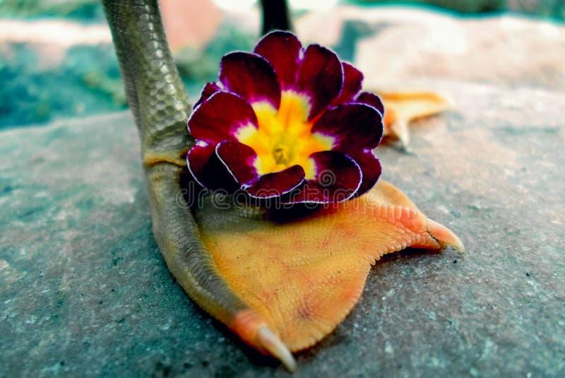 Leg. Duck. Flower stock photography