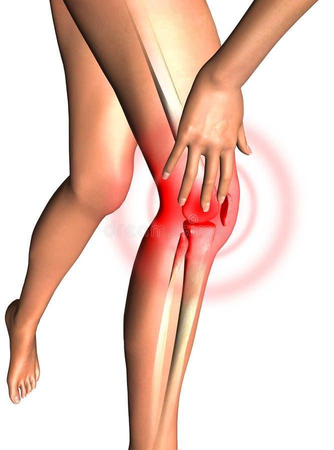 Leg, health 3D render stock illustration