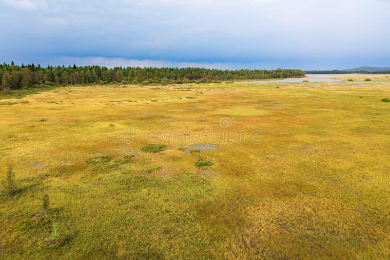 Leg landschap met bos vast royalty-vrije stock afbeelding