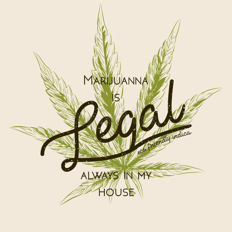 Legal marijuana, weed cannabis green leaf retro logo, T- shirt design. Indica label. Medicine plant legalization product square po. Ster label. Marijuanna is vector illustration