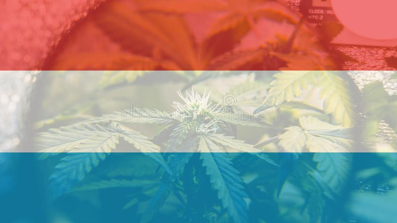 legalização do uso recreacional da marijuana em Luxemburgo Cannab ilustração do vetor