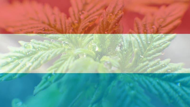 legalização do uso recreacional da marijuana em Luxemburgo Cannab ilustração stock