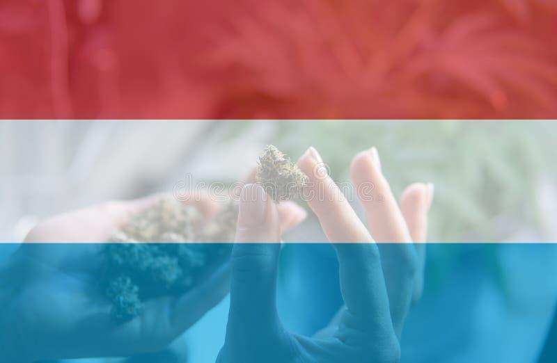 legalização do uso recreacional da marijuana em Luxemburgo Cannab ilustração royalty free