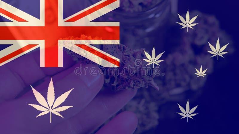 Legalizacja medyczna marihuana w Australia Marihuana eksport Australia w 2019n obrazy royalty free
