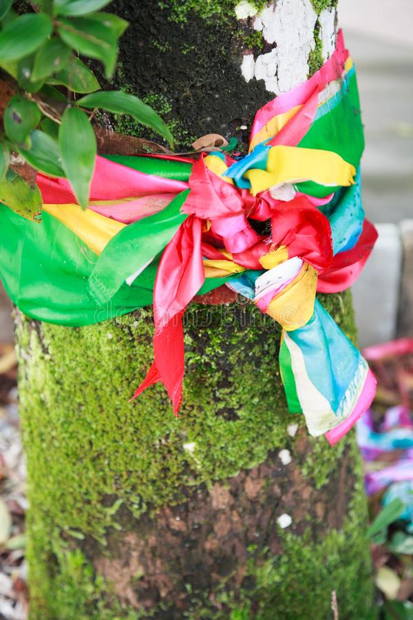 Legando o legando la decorazione santa colori di sette o tricolore del tessuto intorno al vecchio albero antico invecchiato Crede fotografia stock