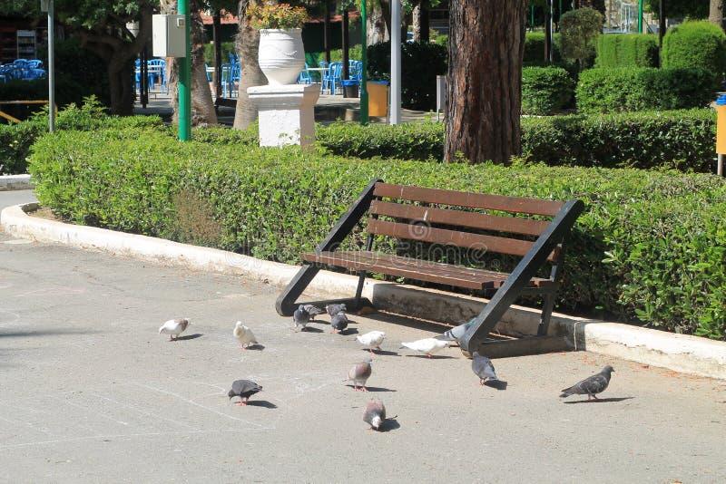 Lege bank en duiven in een park stock fotografie