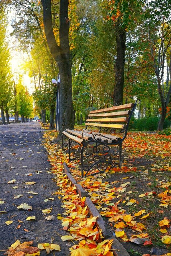 Lege bank in het herfstpark royalty-vrije stock foto