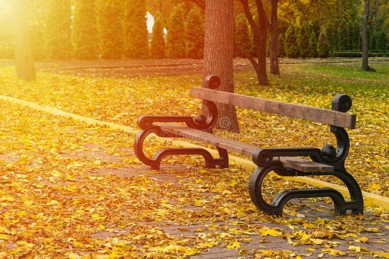 Lege bank in het herfstpark op achtergrond van geel gevallen royalty-vrije stock fotografie