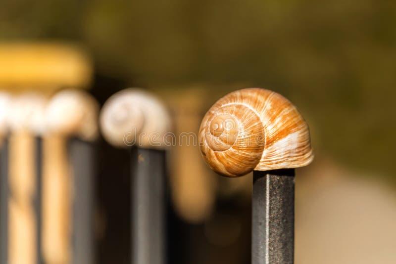 Lege conch slak Gedetailleerde weergave van de schaal De schoonheid van de voorjaarstuin De slak naar huis laten Fibonacci-spiraa royalty-vrije stock afbeeldingen