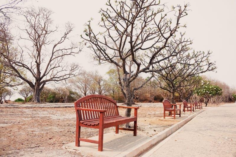 Lege eenzame houten benchs met het sterven bomen in uitstekende toon stock foto's