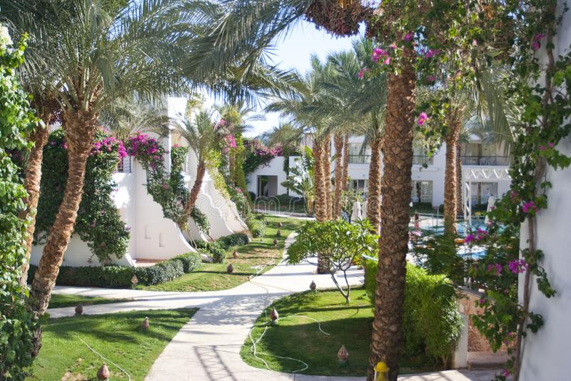 Lege exotische achtergrond met palmen, bloemen en gebladerte royalty-vrije stock foto's